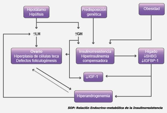 SOP: Relación Endocrino-metabólica de la Insulinoresistencia